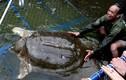 Báo quốc tế đồng loạt đưa tin về cụ Rùa Hồ Gươm