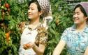 Ngắm nhan sắc phụ nữ Triều Tiên cuối thập niên 1970