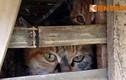 Bắt giữ hơn 3 tấn mèo vận chuyển từ Trung Quốc