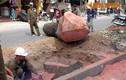 Xót xa cảnh đốn hạ hàng loạt xà cừ trên đường Nguyễn Trãi