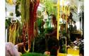 """""""Trốn nóng"""" trong xe bus """"rừng"""" lạ lùng ở Đài Loan"""
