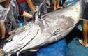 Hành trình đổ mồ hôi câu con cá ngừ đại dương nặng 280kg