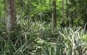 Lạc vào khu rừng nguyên sinh toàn gỗ quý ở Quảng Bình