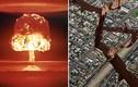 """Dự báo siêu động đất """"hạt nhân"""", tách đôi thành phố Mỹ"""