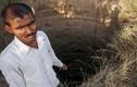 Biến đổi khí hậu khiến 60.000 nông dân Ấn Độ tự sát