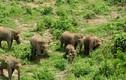 """Hành trình gian nan bảo tồn loài voi ở đất nước """"Triệu voi"""""""