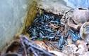 """""""Ghê ghê"""" trong trang trại nuôi hơn 20.000 con côn trùng ở Hà Nội"""