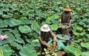 Kinh ngạc: Triệu phú, tỷ phú làm giàu từ những loại cây ngỡ bỏ đi