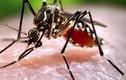 Dùng xà phòng rửa vết muỗi cắn có phòng được sốt xuất huyết?