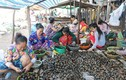 Vào mùa, người già trẻ nhỏ thi nhau lễ ốc thuê kiếm tiền trăm/ngày