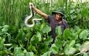 Lạ mà hay: Mới 2 năm mà nhân nuôi lúc nhúc 1.000 con rắn
