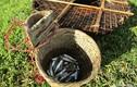 Chiêu độc săn cá suối của trẻ em vùng cao Nghệ An