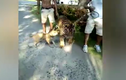 Quái dị: Hổ lớn bị chó nhỏ dọa sợ co rúm người bỏ chạy