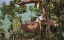 Đến Thái Lan tận hưởng bữa tiệc lơ lửng trên cây