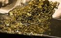 Bất ngờ 2 triệu USD vàng trong ống nước thải