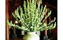 Đừng bao giờ để loại hoa này lên bàn thờ kẻo ngày càng lụi bại