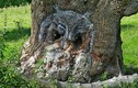 Kinh ngạc nhìn hình thù kỳ quái của những cây cổ thụ