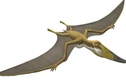 """Video: """"Sát thủ trên không"""" to như máy bay, ăn thịt cả khủng long"""