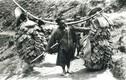 Ảnh độc về Trung Quốc thế kỷ 19 của Sidney Gamble