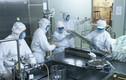 Bộ Y tế cấp phép lưu hành vacxin phối hợp sởi-rubella do VN sản xuất