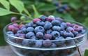 9 thực phẩm bổ não giúp sĩ tử tập trung tốt hơn