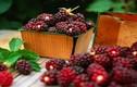 Bí quyết trẻ mãi không già bằng thực phẩm thiên nhiên