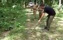 Cận cảnh rắn cạp nong khổng lổ dài 2m nuốt chửng đồng loại