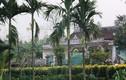 Không khí buồn ở quê nghèo ông Nguyễn Bá Thanh