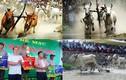 Ảnh: Tưng bừng lễ hội đua bò ở Đồng bằng sông Cửu Long