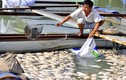 Công an khảo sát vụ cá chết hàng loạt tại Đồng Nai