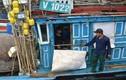 Tàu vỏ thép Trung Quốc tông thẳng vào tàu cá Việt Nam