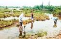 Độc tố cực mạnh khiến cá chết trắng bờ biển Hà Tĩnh đến Huế?