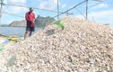 Thủy sản chết hàng loạt ở Kiên Giang: Nhiều chỉ tiêu vượt ngưỡng