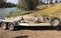 """Cá sấu khổng lồ bị bắn chết, các chuyên gia Úc lo """"nội chiến"""""""