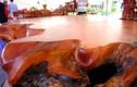 Sập rễ cây gõ đỏ giá 2 tỷ của đại gia Hải Dương