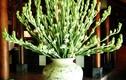 Đây là loại hoa cấm để lên bàn thờ kẻo gia đình ngày càng lụi bại
