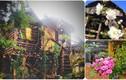 Mê mẩn nhà gỗ tràn ngập hoa như trong cổ tích ở Việt Nam