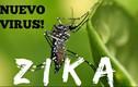 Bộ y tế cảnh báo virus ăn não từ muỗi ở VN