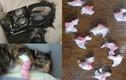 Trai trẻ nhẫn tâm cắt móng vuốt mèo khoe lên mạng