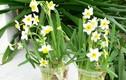 Những loại hoa chơi Tết có nhiều chất độc cần cảnh giác