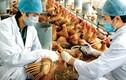 Bộ Y tế ra công văn khẩn phòng dịch cúm từ Trung Quốc