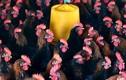 Cảnh báo virus cúm H7N9 biến đổi độc lực nguy hiểm
