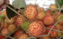 Giữ trái cây tươi không cần hóa chất