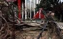 Sức tàn phá kinh hoàng của bão số 6 ở Trung Quốc