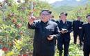 Lãnh đạo Kim Jong-un cười tươi thăm vườn táo trĩu quả