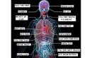 Điều gì xảy ra với cơ thể khi bạn uống rượu?