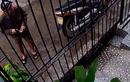 Clip cướp táo tợn xông vào nhà giật Ipad ở Sài Gòn