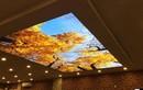 Mê mẩn những mẫu trần nhà 3D đẹp lung linh