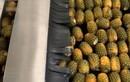 Cận cảnh dây chuyền sản xuất nước ép cam, dứa, dâu, đu đủ