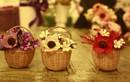 Video: Làm hoa khô trang trí nhà cực đẹp và đơn giản